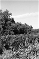 Fehmarn | Natur