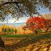 Les beautés de l'automne