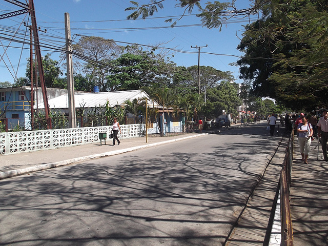 Arbres asphaltés / Paved trees  - 19 mars 2012.
