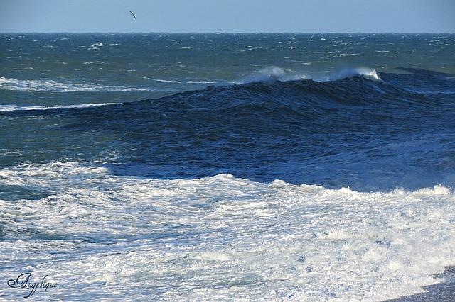 25 novembre 2012 ( Etretat) 430