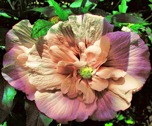Fleur en HDR