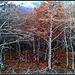 Otoño en la selva de Irati (Navarra)-23