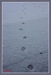 Quand l'hiver laisse des traces ...