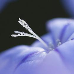 Toujours la petite bleue