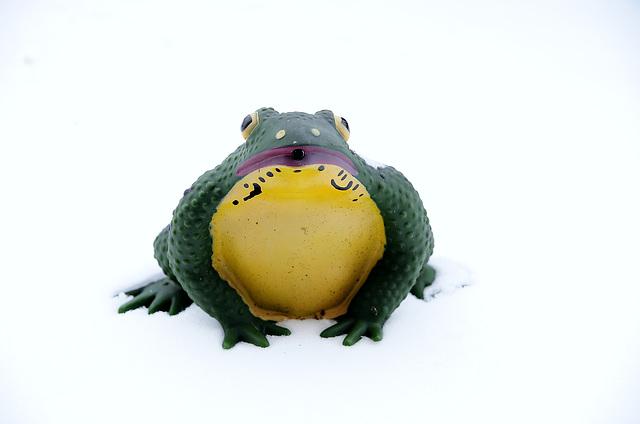 Eisfrosch