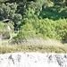 Behind Pikowai camp