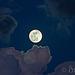 Full Beaver Moon | Gem~in~i Illuminated Lining