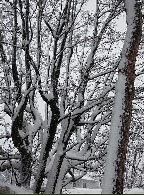 La nature se décore de blanc