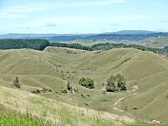 From Pikowai hills 2