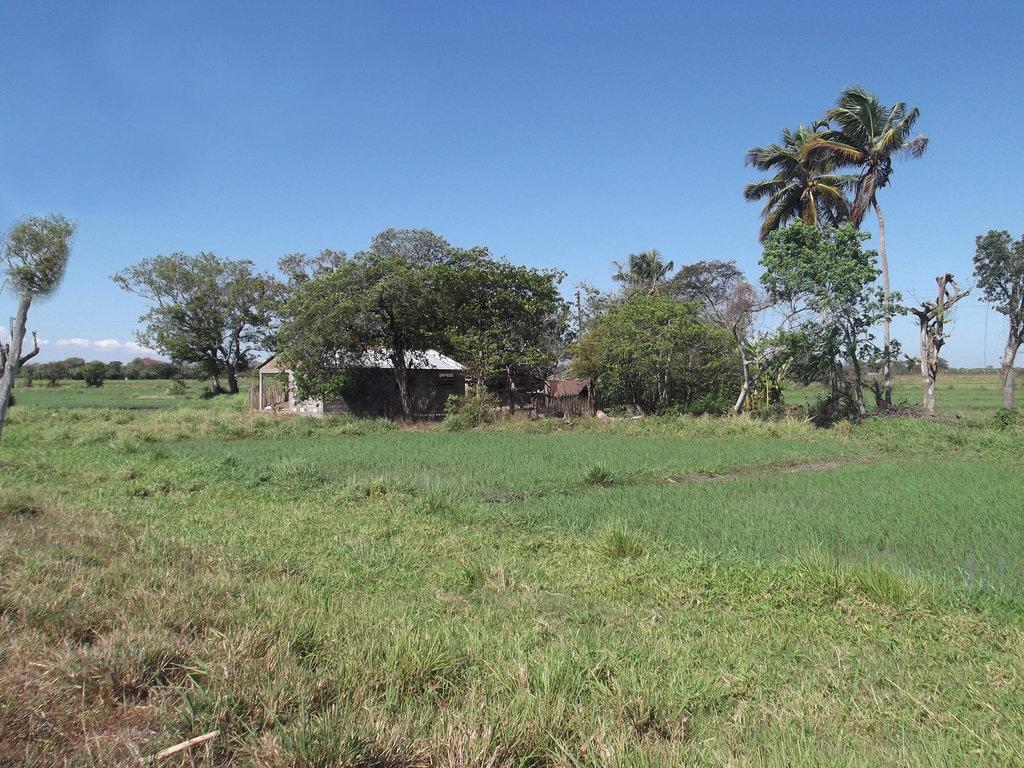 Campagne cubaine  Cuban country - 19 mars 2012.