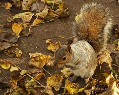 Squirrel monk!