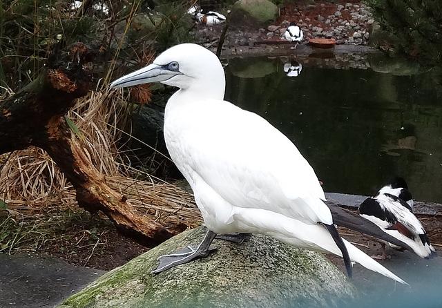 Kurpark Cuxhaven