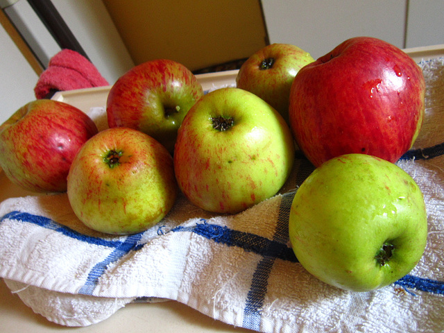 The final apples from my trees of 2012