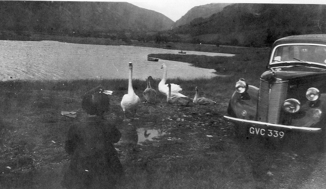With my parents on a journey - feeding swans