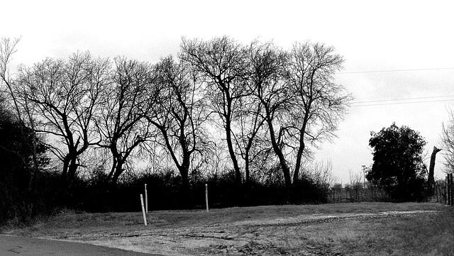 Dancing trees..!