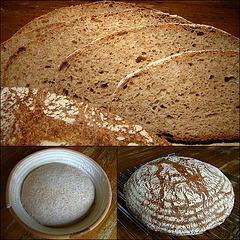 The Saturday 75% Whole Wheat Bread