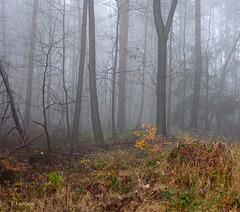 Der Waldrand