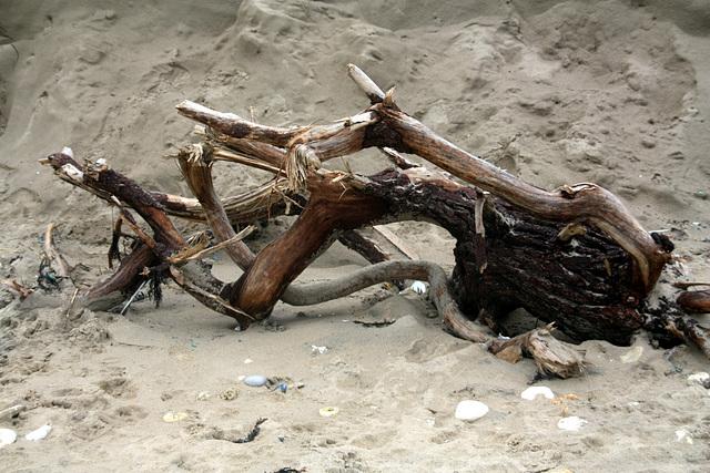 bois mort sur la plage