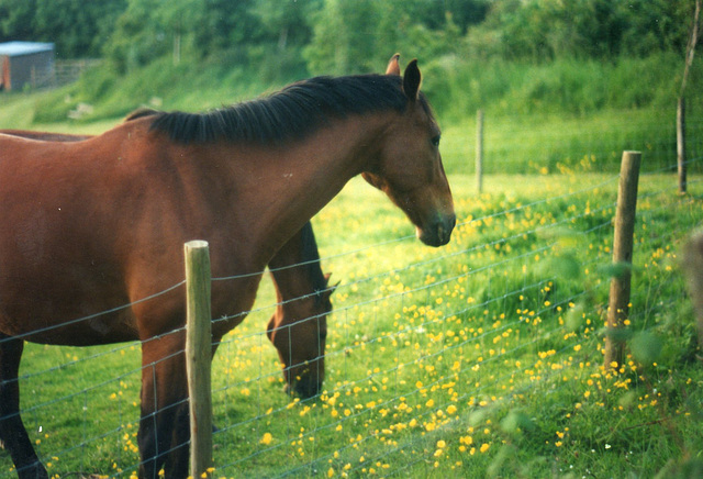 Horses having a graze