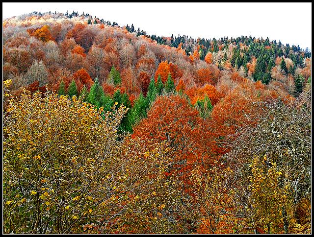 Otoño en la selva de Irati (Navarra)-14