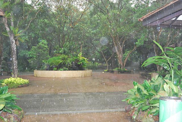 Orchid Garden sous la pluie tropicale