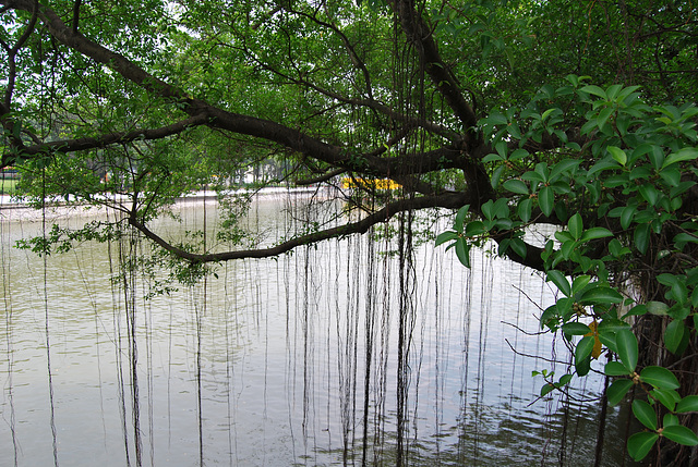 La Mangrove à Singapour