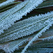 Brilliant hoar frost on leaves