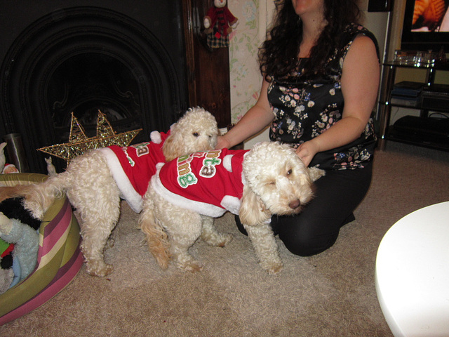 Santas in training coats for the dogs