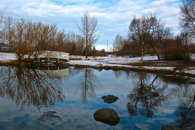 Winter pond in Reykjavik