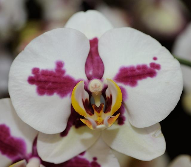 Une orchidée particulière...