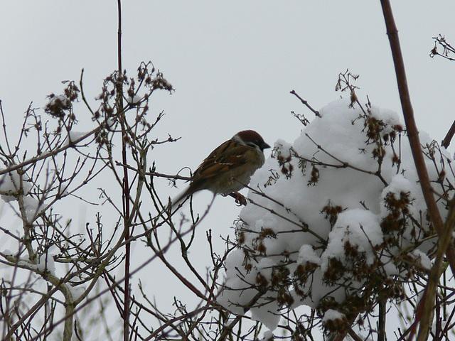 kalte Zeiten für Vögelchen