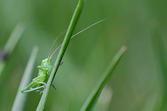 La vie en vert !