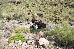 Gran Canaria 0190