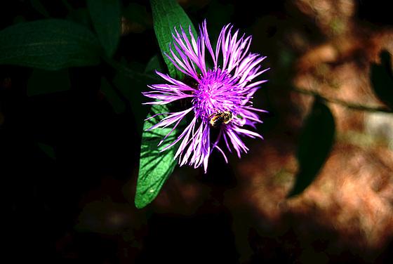 Fleur habitée