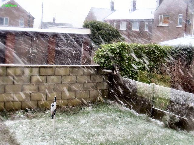 01 snow