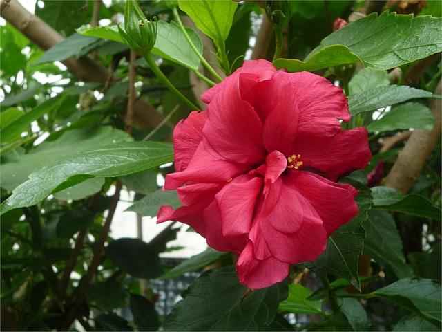 Flor roja entre hojas