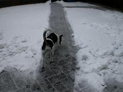 Der erste Schnee für Leyla