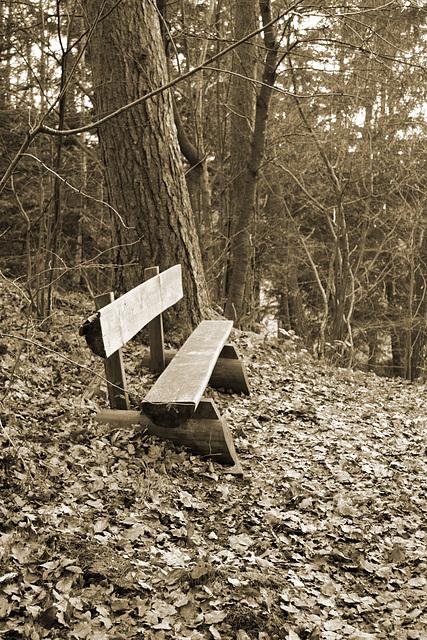 Rastplatz im Wald...