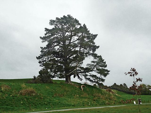 Tree at Jones Landing
