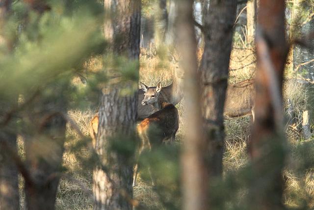 bambi parmis les siens