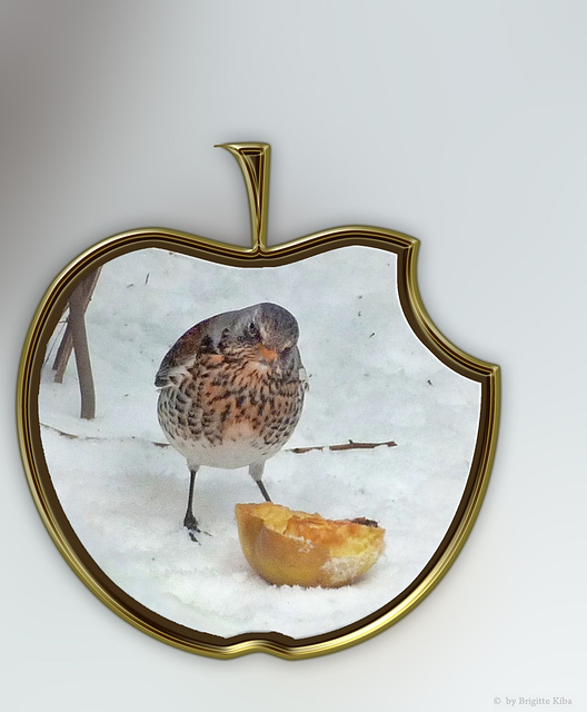 two apples ... one bird :-)