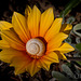 Spiral Home /on a/ Flower Bed