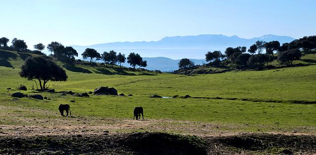 Reserva natural de toros bravos