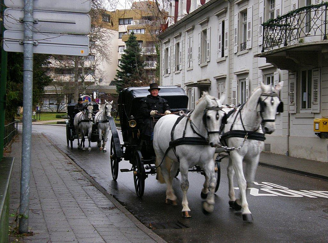 horse and carriage
