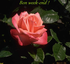 Bon week-end à toutes et à tous !