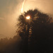 Morning Mist & Rays