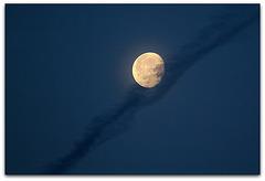 lune dans son écharpe en crêpe noir