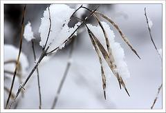 Und wieder hat's geschneit...