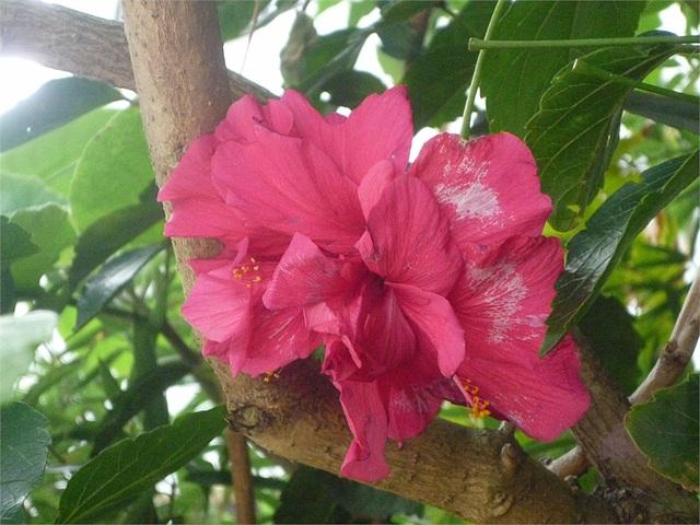 Flor roja sobre la rama
