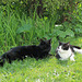 Roxy & Pippin enjoying the sun